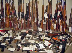 A collection of many evidence-tagged firearms, including handguns, rifles, and small arms.